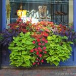 Perfect Shade Plants for Windows Boxes 31