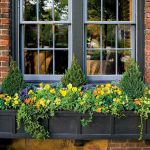 Perfect Shade Plants for Windows Boxes 33