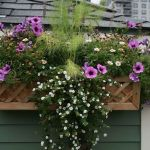 Perfect Shade Plants for Windows Boxes 35