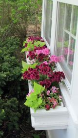 Perfect Shade Plants for Windows Boxes 38