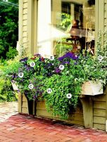 Perfect Shade Plants for Windows Boxes 40