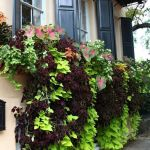 Perfect Shade Plants for Windows Boxes 41