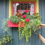 Perfect Shade Plants for Windows Boxes 46