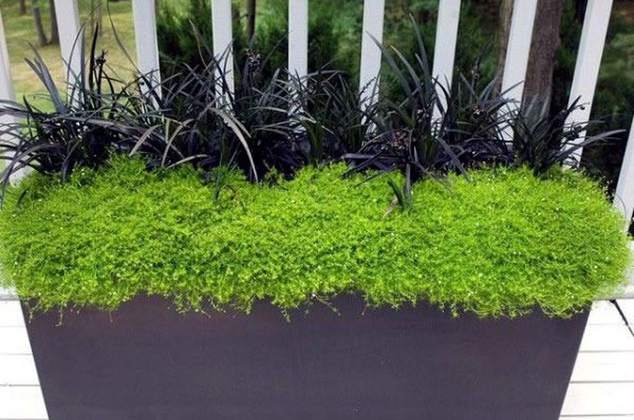Perfect Shade Plants for Windows Boxes 11