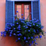 Perfect Shade Plants for Windows Boxes 58