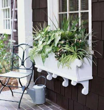 Perfect Shade Plants for Windows Boxes 6