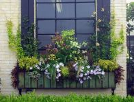 Perfect Shade Plants for Windows Boxes 65