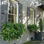 Perfect Shade Plants for Windows Boxes 75