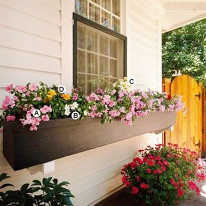 Perfect Shade Plants for Windows Boxes 83
