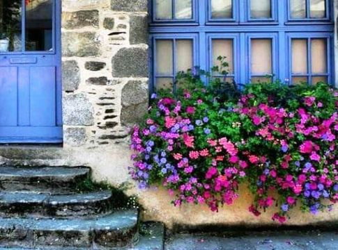 Perfect Shade Plants for Windows Boxes