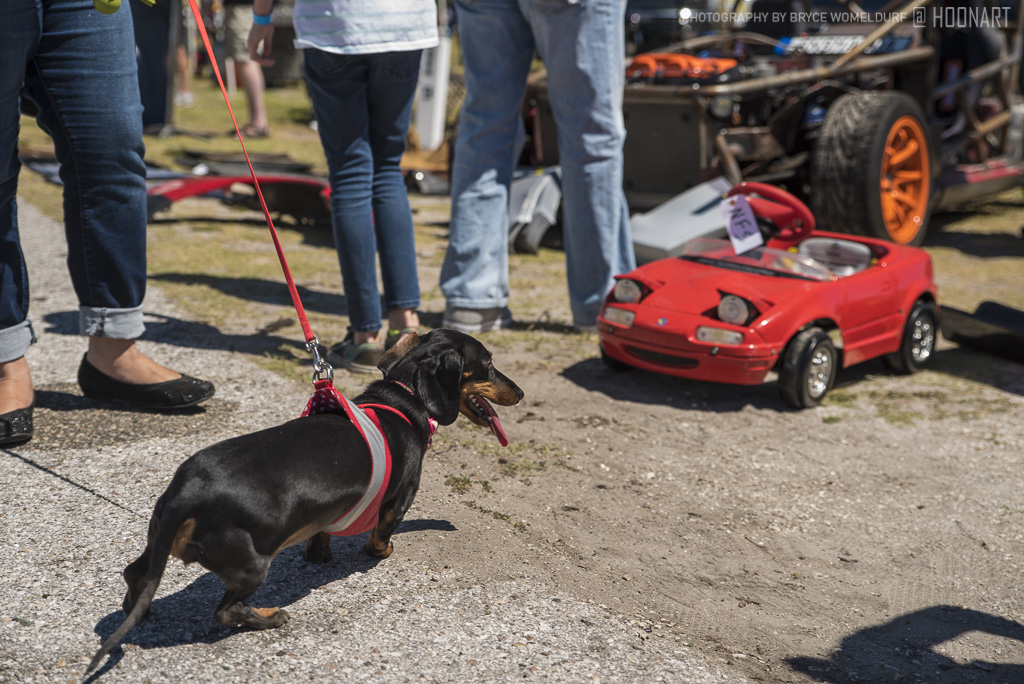 Kimi the Dachshund looking at a pedal car