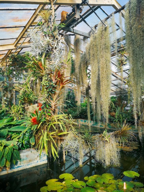 A tropical greenhouse with green plants and a pond with lillypads - Bratislava's Botanic Gardens (Hidden Spots in Bratislava)