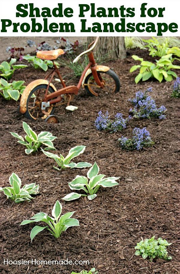 Shade Plants for Problem Landscape - Hoosier Homemade on Shady Yard Ideas  id=11211