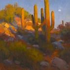wodark cactus