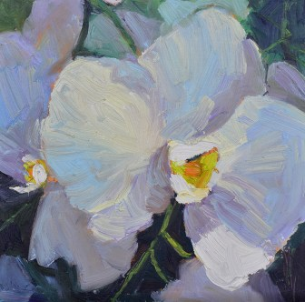 orchid study white