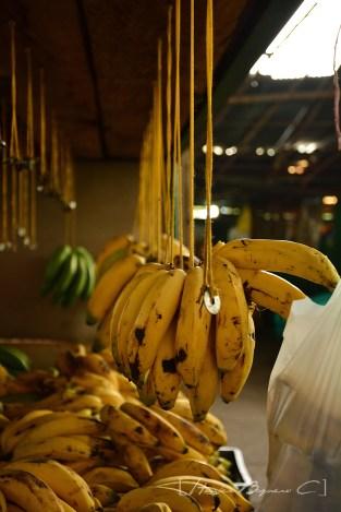 Exposición bananera