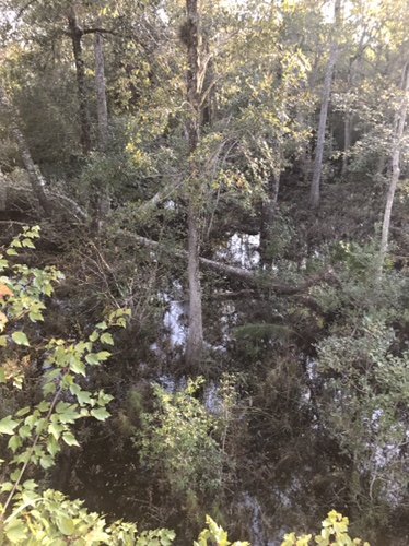 Bowhunting stream scouting trip 2017