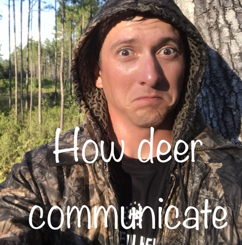 How deer communicate