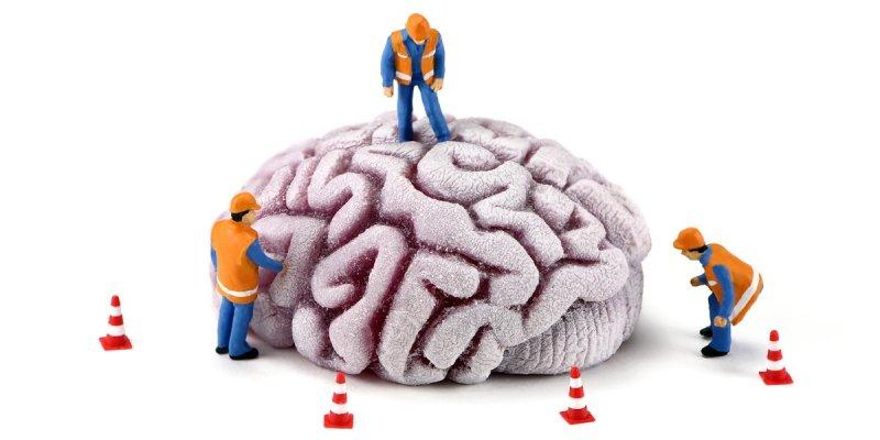 Emotional Brain