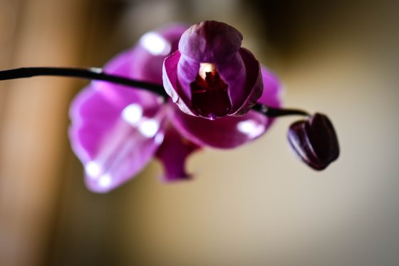 wpid-orchid2.jpg