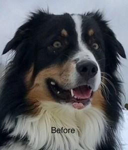 CBD for Warts on Dogs - Hope Botanicals