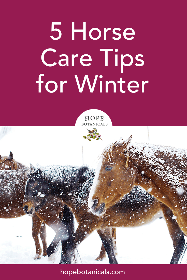 Tips for wintering your horse