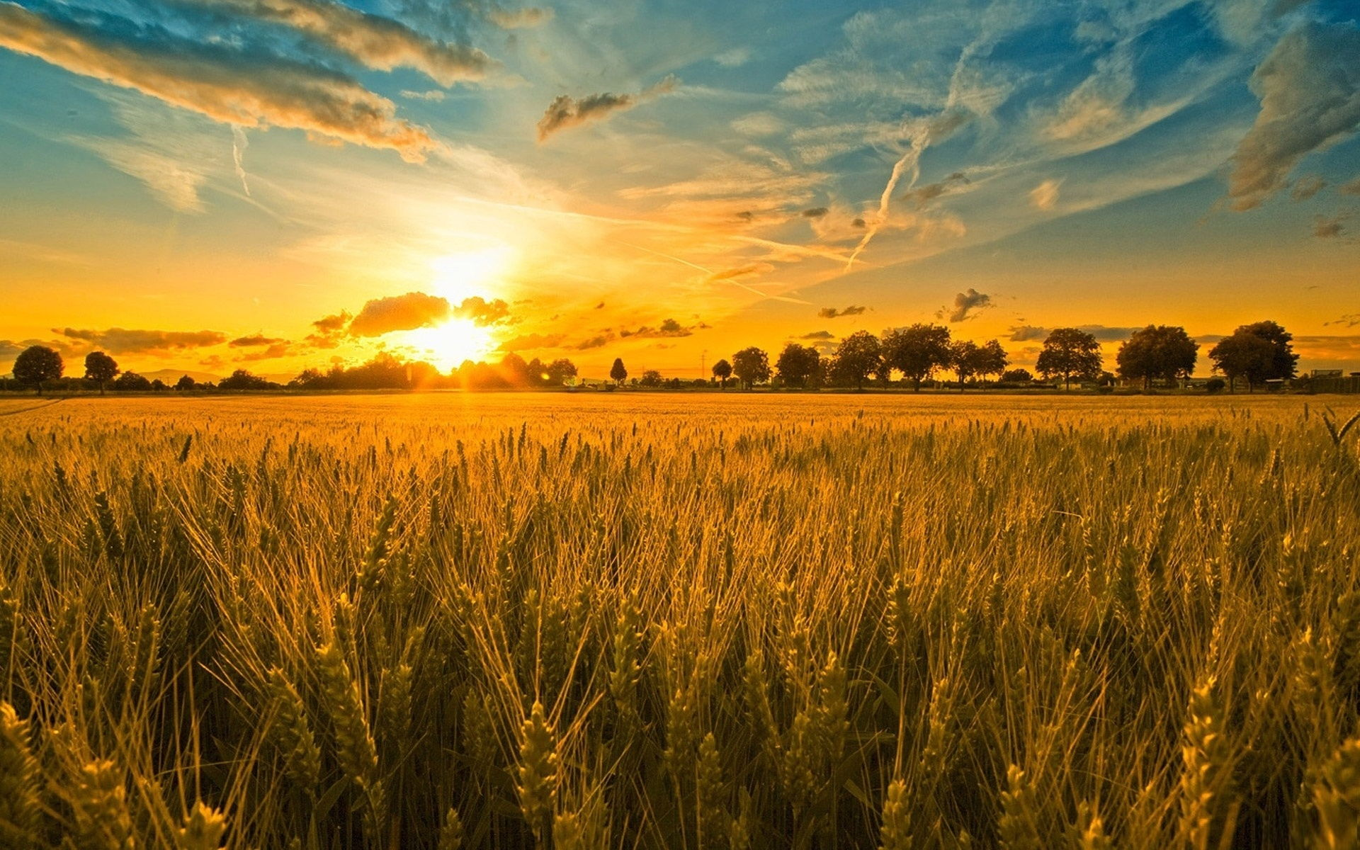 sunset-and-wheat-field-wallpaper-hd-beautiful-desktop-background-hd
