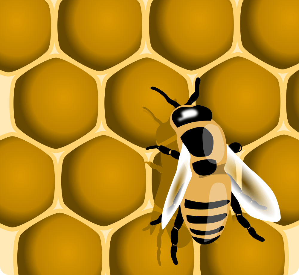 a bee in the hive making sugary honey