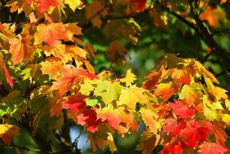 Fall Brings a Chance to Model to Our Children How We Handle Change
