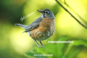 The Robin and The String – Again!