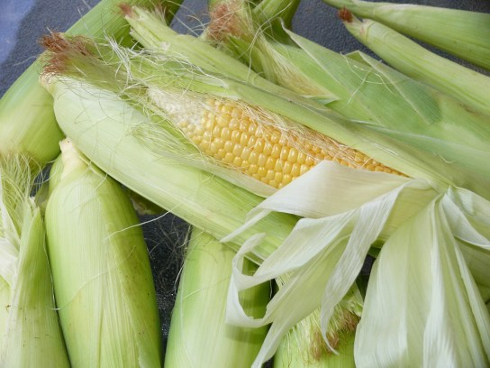 corn-776559_1280