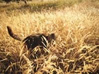 Uhmmm, me parece haber visto una linda hierbita // Uhmmm, I've seen this grass before