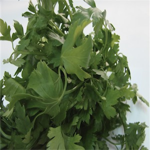 Parsley 'Flat Italian'