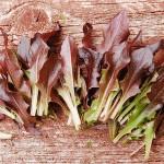Lettuce ' Royal Red Oakleaf'