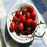 Tomato 'Red Cherry'