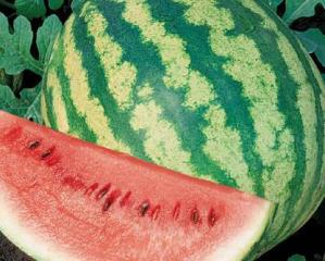 Watermelon 'Crimson sweet'