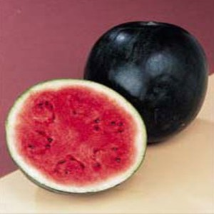 Watermelon' Sugar Baby'