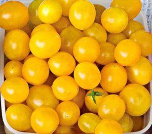 Tomato 'Blondkopfchen'