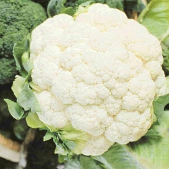 Cauliflower - Early Snowball | Organic |