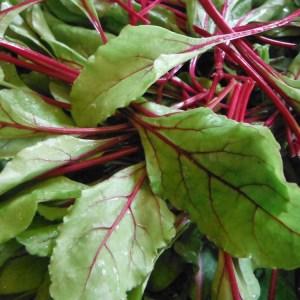Chard - Ruby Red | Organic |
