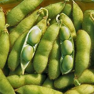 Soybean - Envy