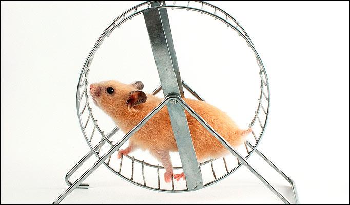 hamster on a wheel