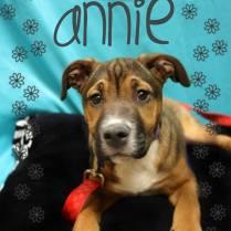 Annie - Adopted!