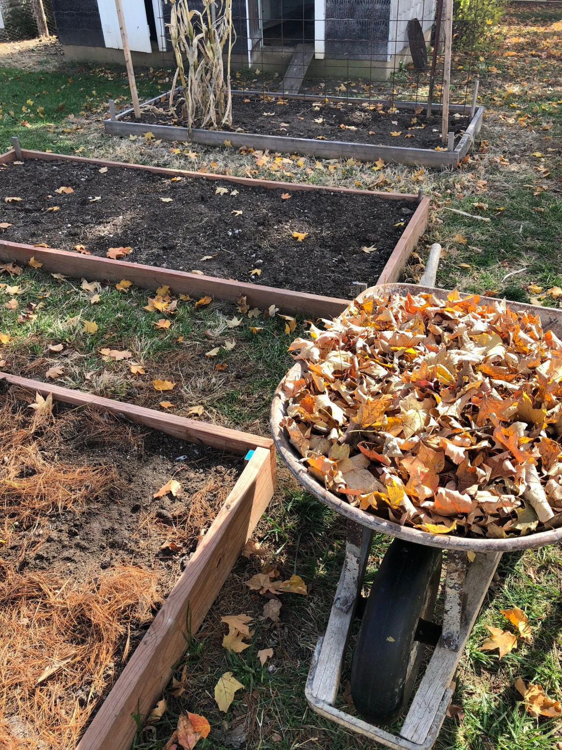how to mulch raised beds with pine needles
