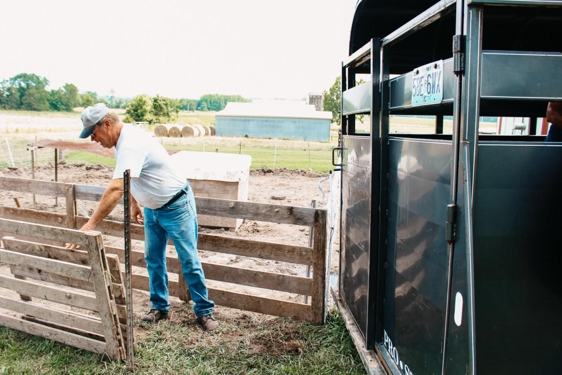 hauling hogs