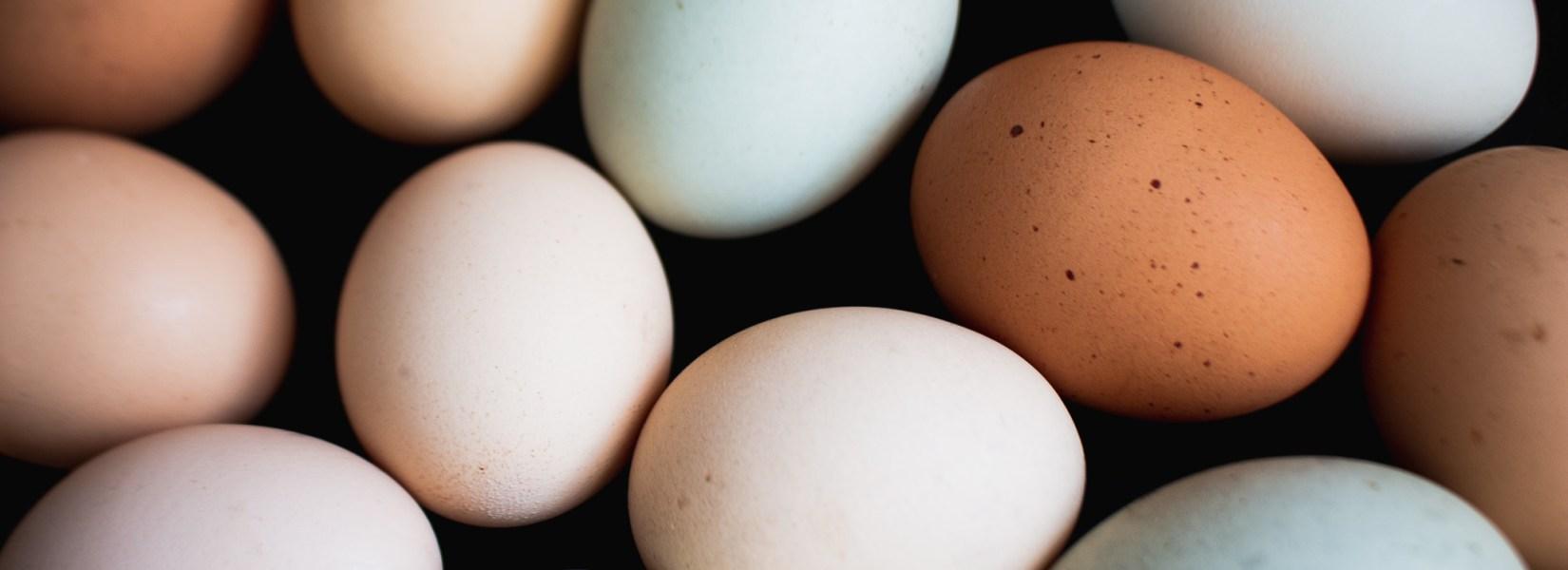 Choosing Chicks for a Colorful Egg Basket