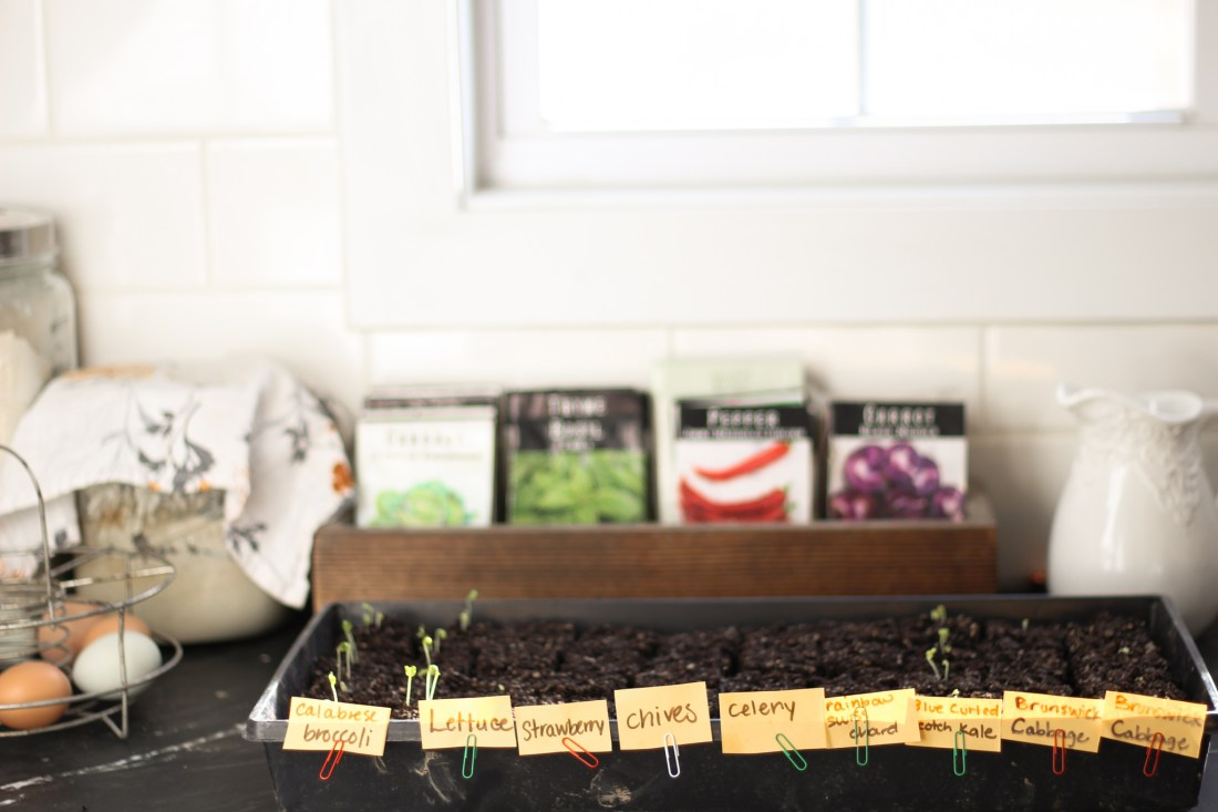 seeds sprouted