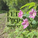 FET Prep Week 17: Suppression Check Disappointment | The Downsides of Fertility Meds