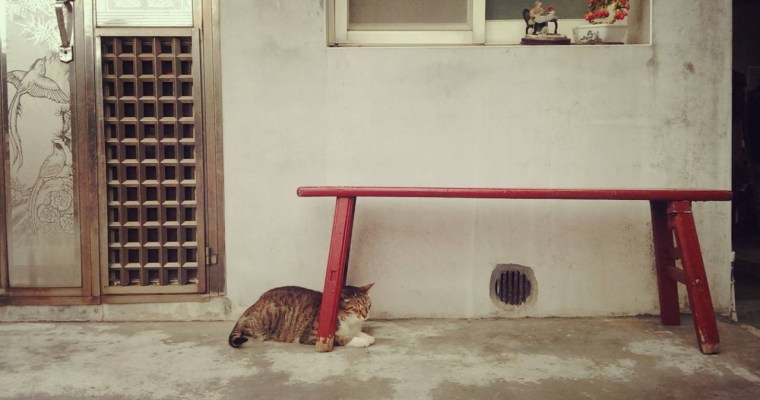 Houtong Cat Village: A purrfect day trip from Taipei