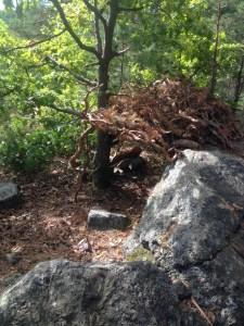 Skogen I Ur och Skur Alvik